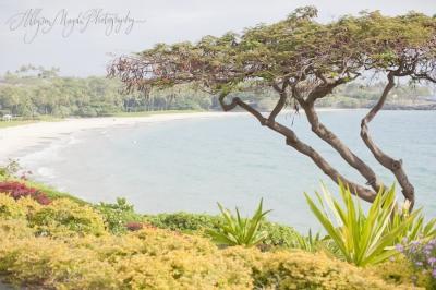 katie + brad…kohala coast, hawaii
