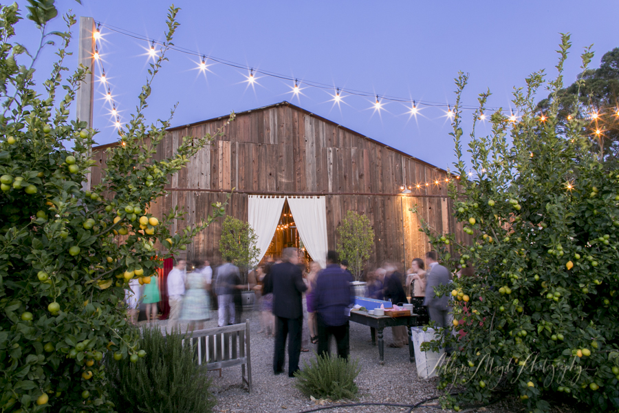 Dana Powers House Barn wedding, Nipomo